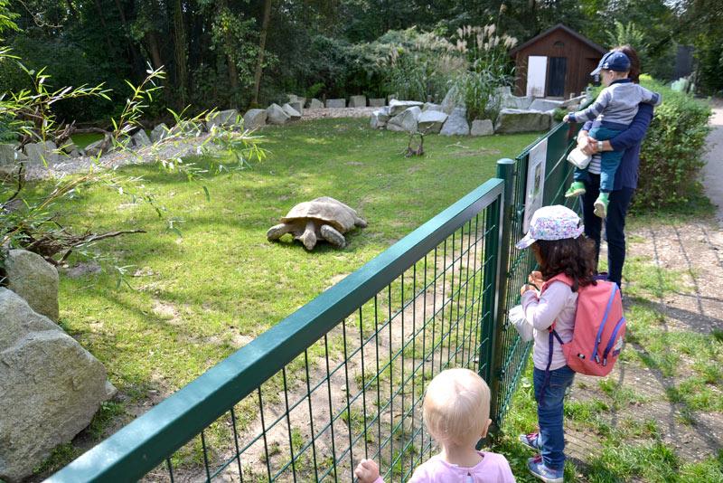 Zoo Linz Linz Tourism